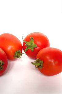 イタリアントマトの写真素材 [FYI00404467]