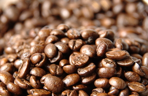 コーヒー豆の写真素材 [FYI00404507]