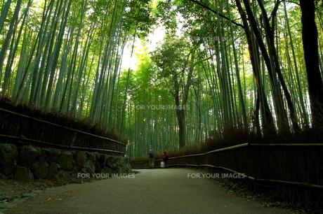 竹林の道の写真素材 [FYI00404588]