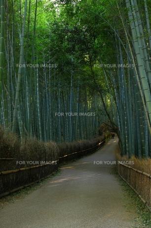 竹林の道 縦位置の写真素材 [FYI00404606]