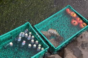 川で冷やされるラムネとトマトの素材 [FYI00404724]