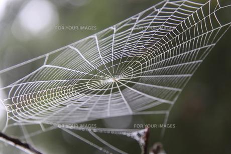 朝靄の中の蜘蛛の巣の写真素材 [FYI00404737]