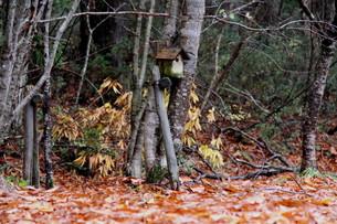 山中の小鳥小屋の写真素材 [FYI00404740]