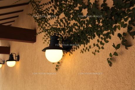 壁のツタとライトの写真素材 [FYI00404742]