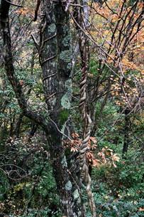 秋の山の自然造形の素材 [FYI00404749]