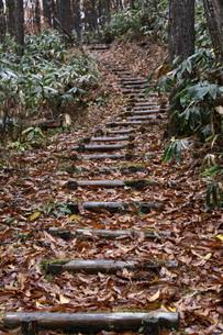 落ち葉に埋もれる山道の素材 [FYI00404753]