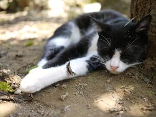 昼寝する猫の写真素材 [FYI00404754]