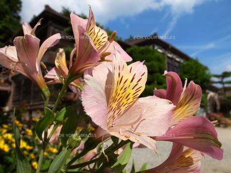 校庭に咲く花の素材 [FYI00404828]