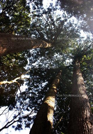 木洩れ日の写真素材 [FYI00404851]