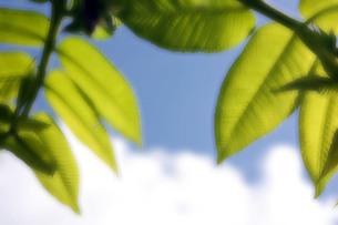 新緑の写真素材 [FYI00404926]