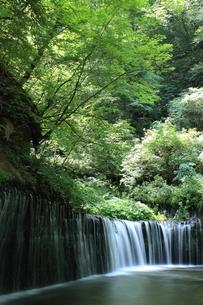 軽井沢の白糸の滝の素材 [FYI00405130]
