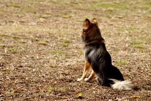 遠くを見る犬の写真素材 [FYI00405149]