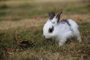 パンダ子ウサギの写真素材 [FYI00405272]