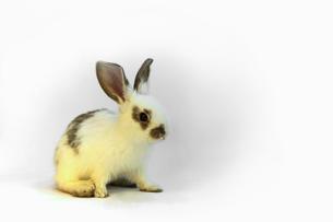 子ウサギの写真素材 [FYI00405319]