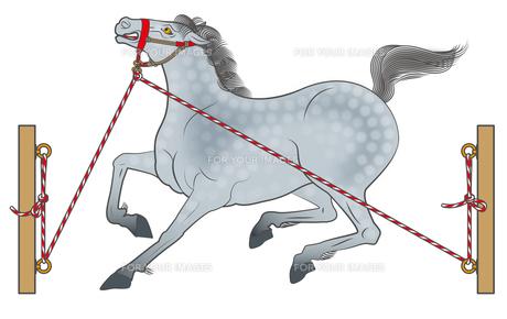 連銭葦毛の繋ぎ馬の写真素材 [FYI00405919]