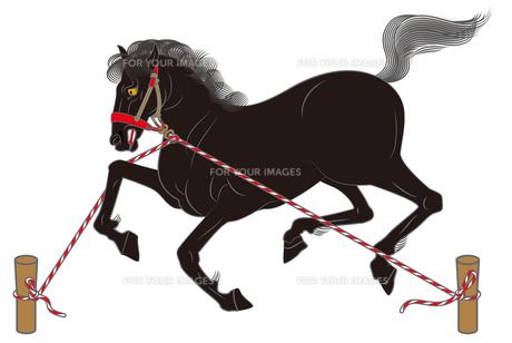 繋ぎ馬の写真素材 [FYI00405932]