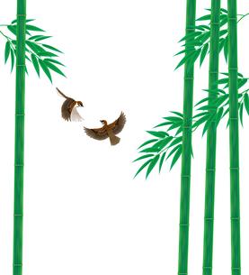 青竹と雀の写真素材 [FYI00405943]