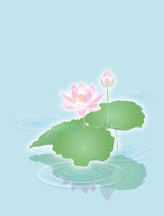 蓮の花の写真素材 [FYI00405944]