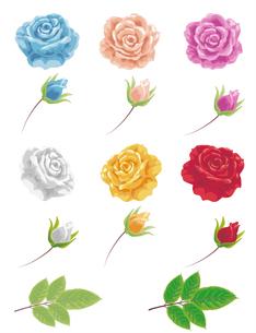 薔薇のパーツの写真素材 [FYI00405954]