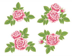 薔薇の素材 [FYI00405992]