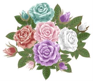 薔薇の写真素材 [FYI00406005]