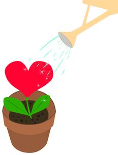 ハートの花の水遣りの写真素材 [FYI00406991]