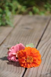 摘み取った花の写真素材 [FYI00407119]