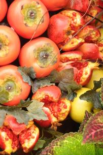 柿  ザクロ 収穫の秋の写真素材 [FYI00407127]