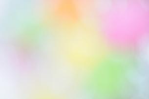 カラーの写真素材 [FYI00407147]