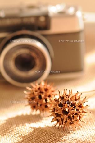 写真を撮るの写真素材 [FYI00407210]