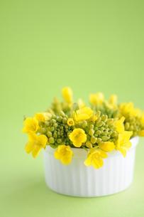 菜の花の写真素材 [FYI00407216]