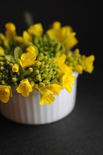 菜の花の写真素材 [FYI00407223]