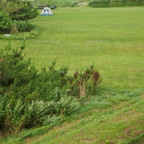 芝生の公園の写真素材 [FYI00407292]
