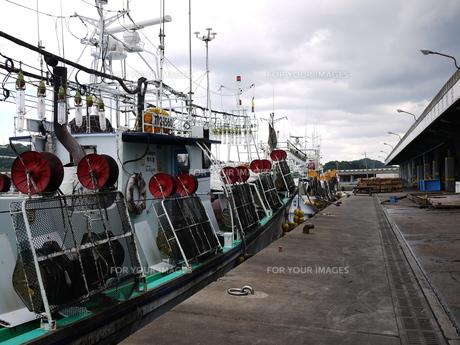 停泊するイカ釣り船の写真素材 [FYI00407515]