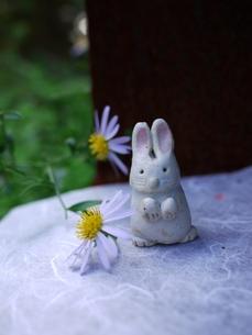 花とうさぎ2の写真素材 [FYI00407516]