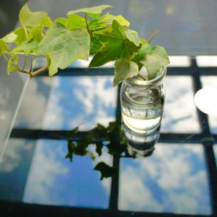 牛乳瓶とアイビーと青空1の写真素材 [FYI00407558]
