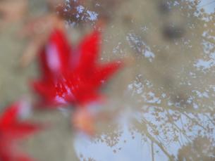 水溜りに映るもみじの写真素材 [FYI00407573]
