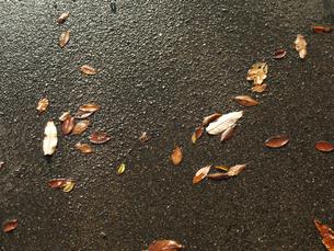 雨上がりのコンクリートと枯葉の写真素材 [FYI00407589]