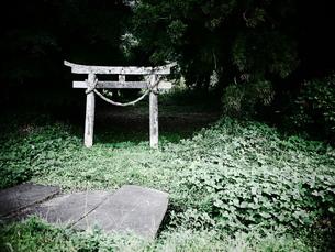 鎮守の森の写真素材 [FYI00407658]