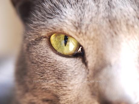 ヤマトの目の素材 [FYI00407748]