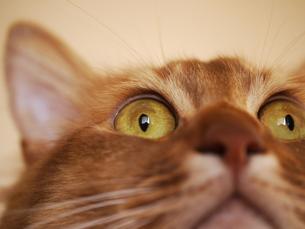 leonの顔の写真素材 [FYI00407749]