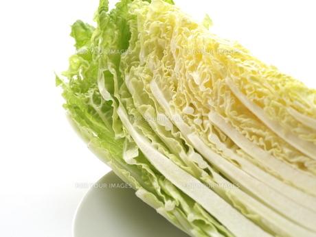 白菜の写真素材 [FYI00407795]