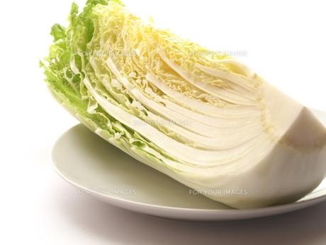 白菜の写真素材 [FYI00407803]