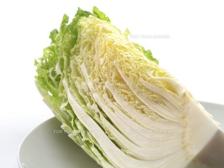 白菜の写真素材 [FYI00407805]