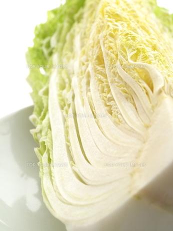 白菜の写真素材 [FYI00407806]