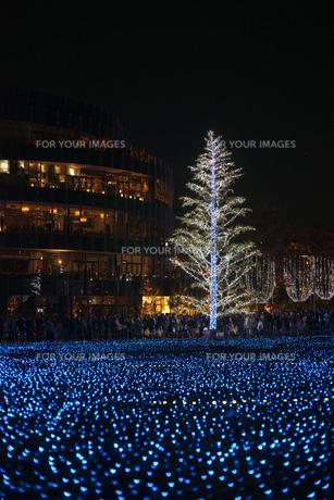 光る木の写真素材 [FYI00408130]