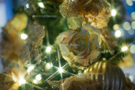 薔薇の写真素材 [FYI00408135]