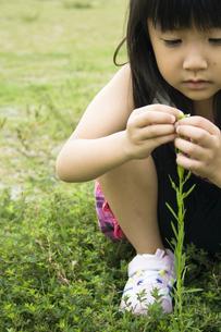 公園の草で遊ぶ女の子の写真素材 [FYI00410796]