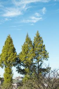 木々と空の風景の写真素材 [FYI00410874]