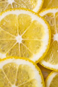 輪切りのレモンの写真素材 [FYI00411025]